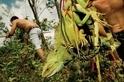 追蹤東南亞兩棲爬蟲走私貿易
