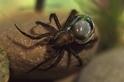 蜘蛛怎麼用氣泡在水下過活?