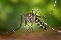 氣候變暖產生的「超級昆蟲」,會給人類帶來怎樣的威脅?