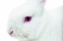 放過兔子的眼睛