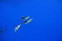 台灣的海豚會跟我們說什麼?