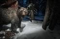 無所不吃的灰熊除了吃鹿,還會吃蛾?