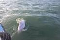 跟時間賽跑 白海豚紀錄創新低 凸顯棲地保育的五大關鍵