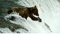 熊熊看見你(直播ing)