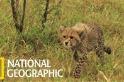 獵豹寶寶的「獵殺瞪羚實作課程」
