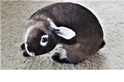 「歪頭兔兔」Ginny將能過著幸福快樂的日子