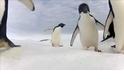 阿德利企鵝數量增加了,卻仍有隱憂