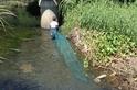 消失中的時代記憶 認識那些「回不去」的臨海溪流洄游性生物
