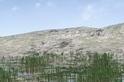 奇異化石揭露亞洲已知最古老的森林