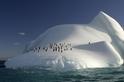冰山上的企鵝