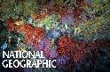 地中海的紅珊瑚危機