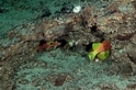 這隻魚叫什麼名字?你來幫牠取!