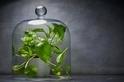 若你想買盆栽淨化空氣,還是放回去吧