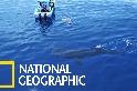 空拍視角:坎昆外海的鯨鯊覓食場