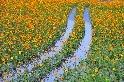 【自然平衡 農業永續 攝影徵件活動】 得獎作品欣賞