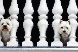 欄杆後的狗