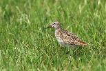 臺灣度冬水鳥六年監測成果出爐 多種鳥類數量銳減 蘭陽平原最嚴重