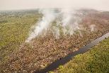 研究首次發現:保護熱帶泥炭地 可降低新興傳染病傳播風險