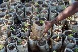 如何避免在錯誤的地方種植錯誤的樹種? 英國皇家植物園教你十大守則