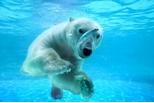 北極熊的食物