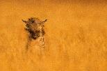 河畔草原上的鬣狗