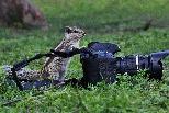 松鼠攝影師