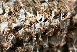 全球吃蟲熱? 歐洲新創推出蟋蟀麵粉、蟋蟀脆片 搶攻人類食品市場