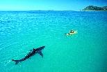 追蹤鯊魚的意外轉折