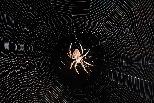 銀色蜘蛛網