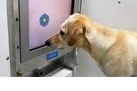 透過遊戲訓練,老狗也能學會新把戲?