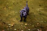 喜歡水的狗兒