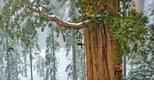 森林裡的巨人