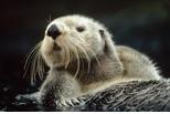 海獺的日常生活