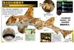 《超能力鯊魚百科》會走路的螃蟹殺手