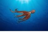 章魚有靈魂嗎? 這位作者認為是的