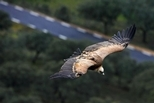 鳥兒也注意交通速限
