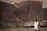 捕鯨站的企鵝