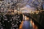 中目黑:櫻花