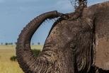 大象保健日