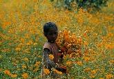 採花的女孩