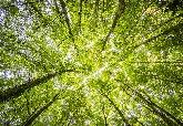 終止毀林新模式 英美挪威組「樹葉聯盟」 募10億美元護熱帶森林