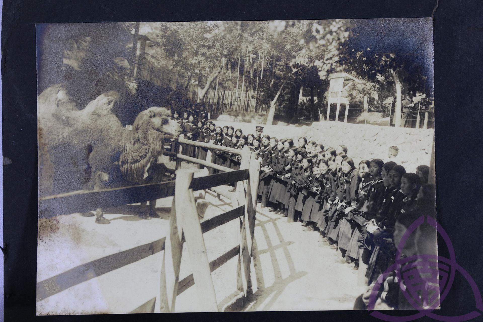 1914 年開園的圓山動物園,在日治時代是新潮的現代化景點,也是新春熱門出遊地,許多父母會在新年假期帶小孩動物園玩。圖為 1920 年代,二高女學生到動物園校外旅遊。 圖片來源│臺南女中百年老照片
