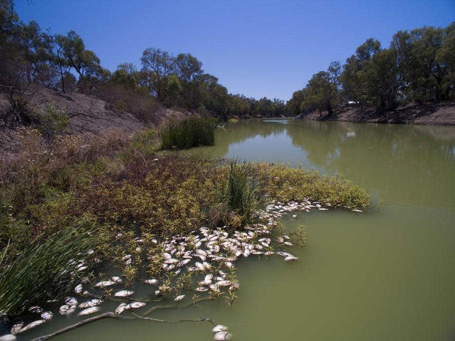 這個新南威爾斯達令河(Darling River)的魚群大量死亡事件被認為與乾旱有關,也是這個地區有記憶以來規模最大的事件之一。 PHOTOGRAPH BY MIKE BOWERS, EYEVINE/REDUX