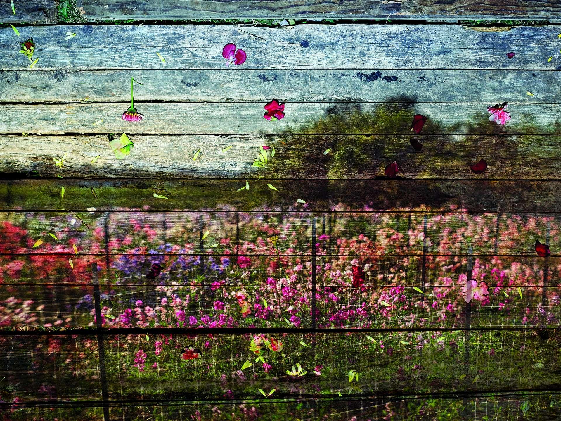 追求以原創手法拍攝花朵的阿貝拉多.莫瑞爾,將一片地景投射到一片老舊的門板上。攝影:阿貝拉多.莫瑞爾