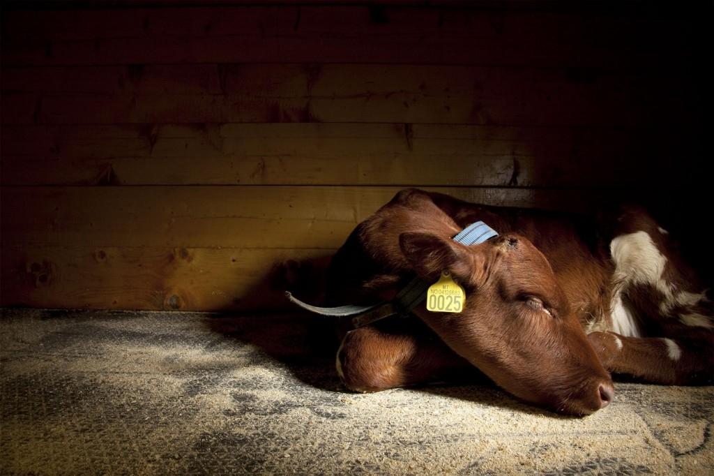 大型動物都站著睡覺嗎?