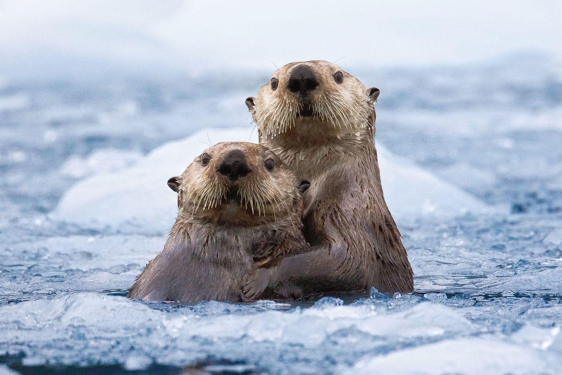 Photograph by Roman Golubenko, National Geographic
