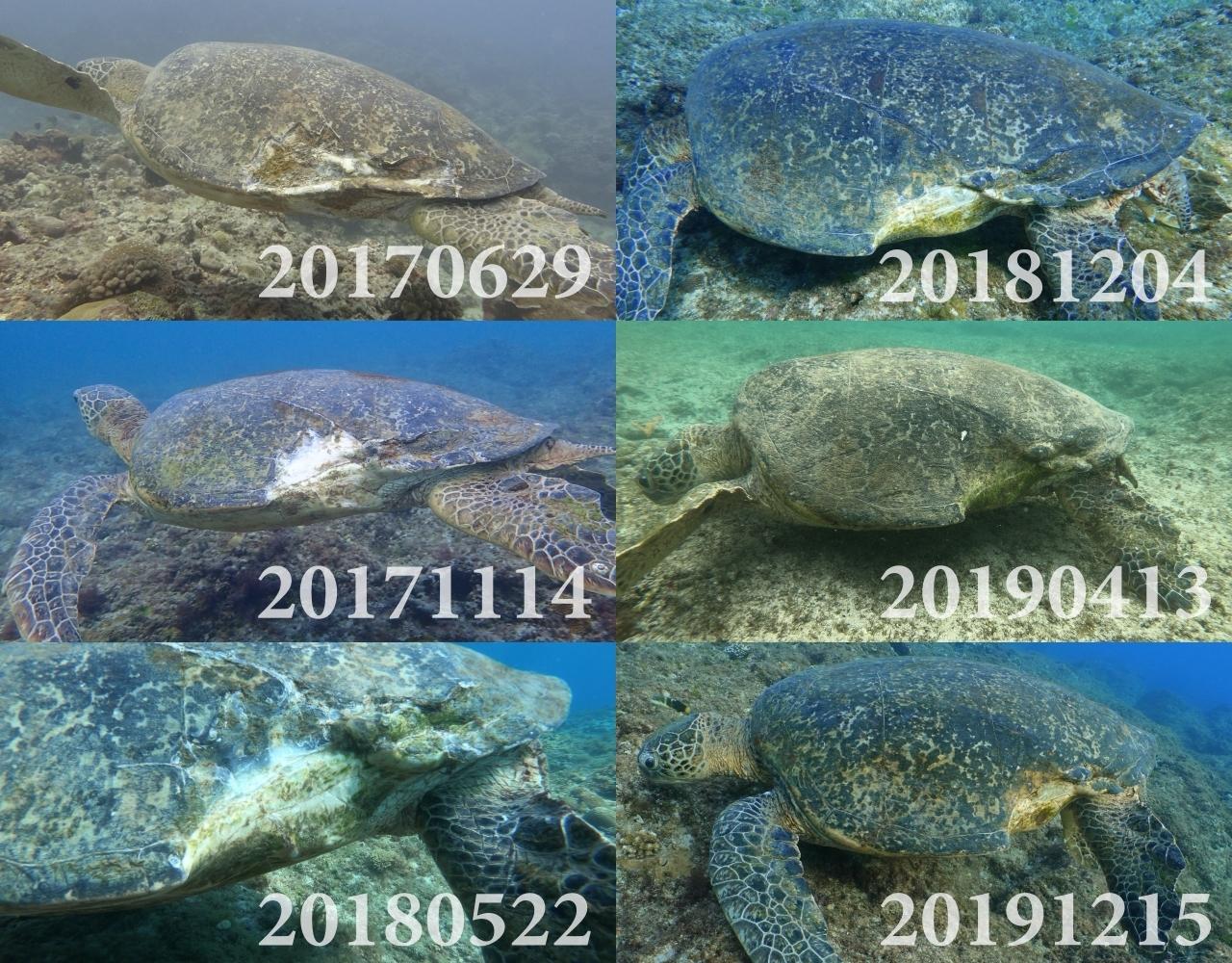 「海龜點點名」裡的通報紀錄。照片提供:蘇淮