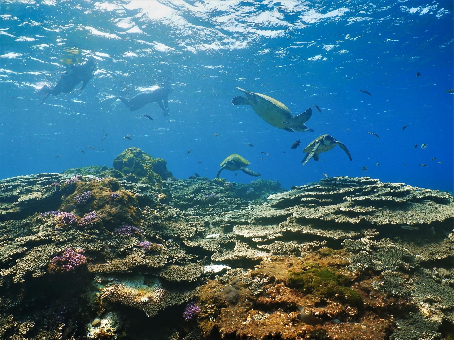 海龜們正在八丈島的海龜清潔站做清潔。攝影:蘇淮
