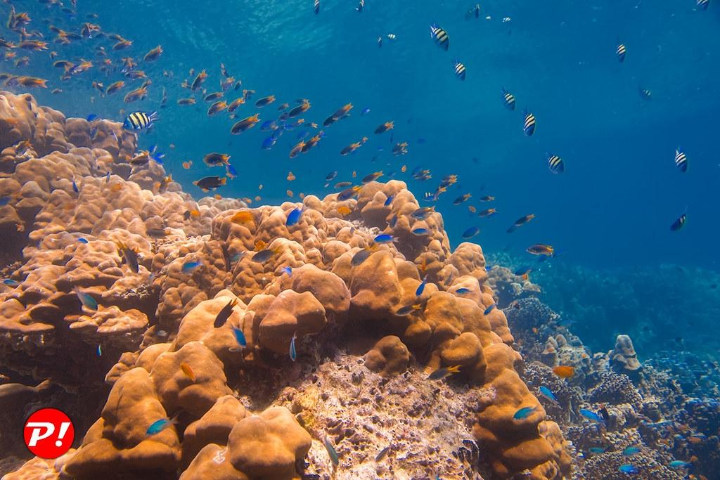現在學界已經知道如何在2050年前恢復海洋的野生動植物。照片來源:Phuket(CC BY 2.0)