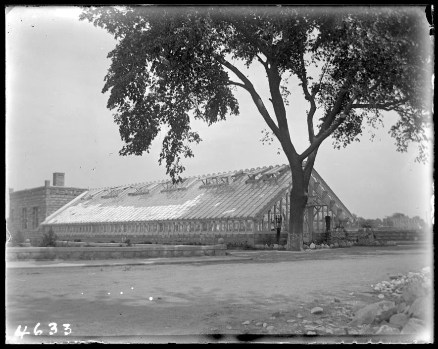 一棵樹為感化院的溫室提供庇蔭。PHOTOGRAPH COURTESY NEW YORK HISTORICAL SOCIETY